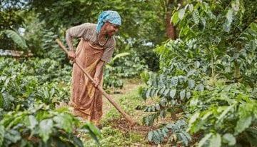 Regiones de Café 101: ¿Qué Distingue al Este de África?