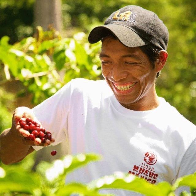 Caficultor recogiendo cerezas de café