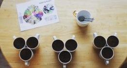 Ciencia del Café: Descifrando de Dónde Viene el Sabor