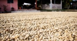Why Some Farmers Struggle to Produce Specialty Coffee