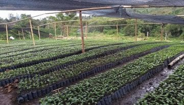 The Entrepreneurs Helping to Cultivate Colombia's Coffee Industry