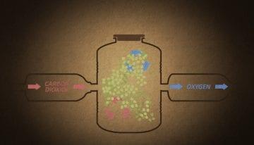 Procesamiento Experimental: Video Sobre La Maceración Carbónica Lavada