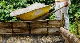 Cómo Mejorar las Ganancias: 4 Estrategias Para Productores de Café