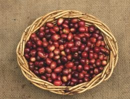 A Roaster's & Coffee Buyer's Guide to Rwandan Beans