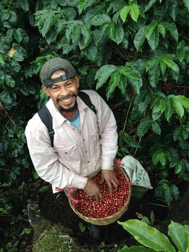 Productor de café