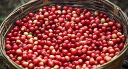 The Reality of Producing Specialty Coffee on Tiny Farms