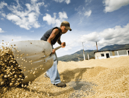 How Much Does Your Coffee Actually Cost to Produce?