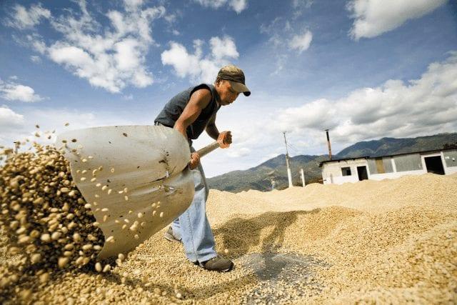 Secado de cafe