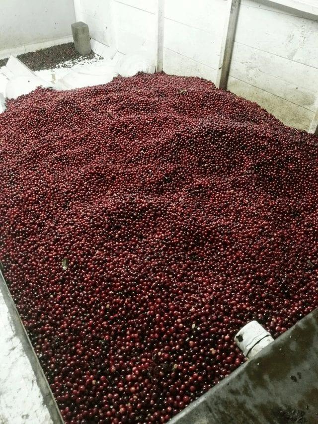 Tanque de fermentacion