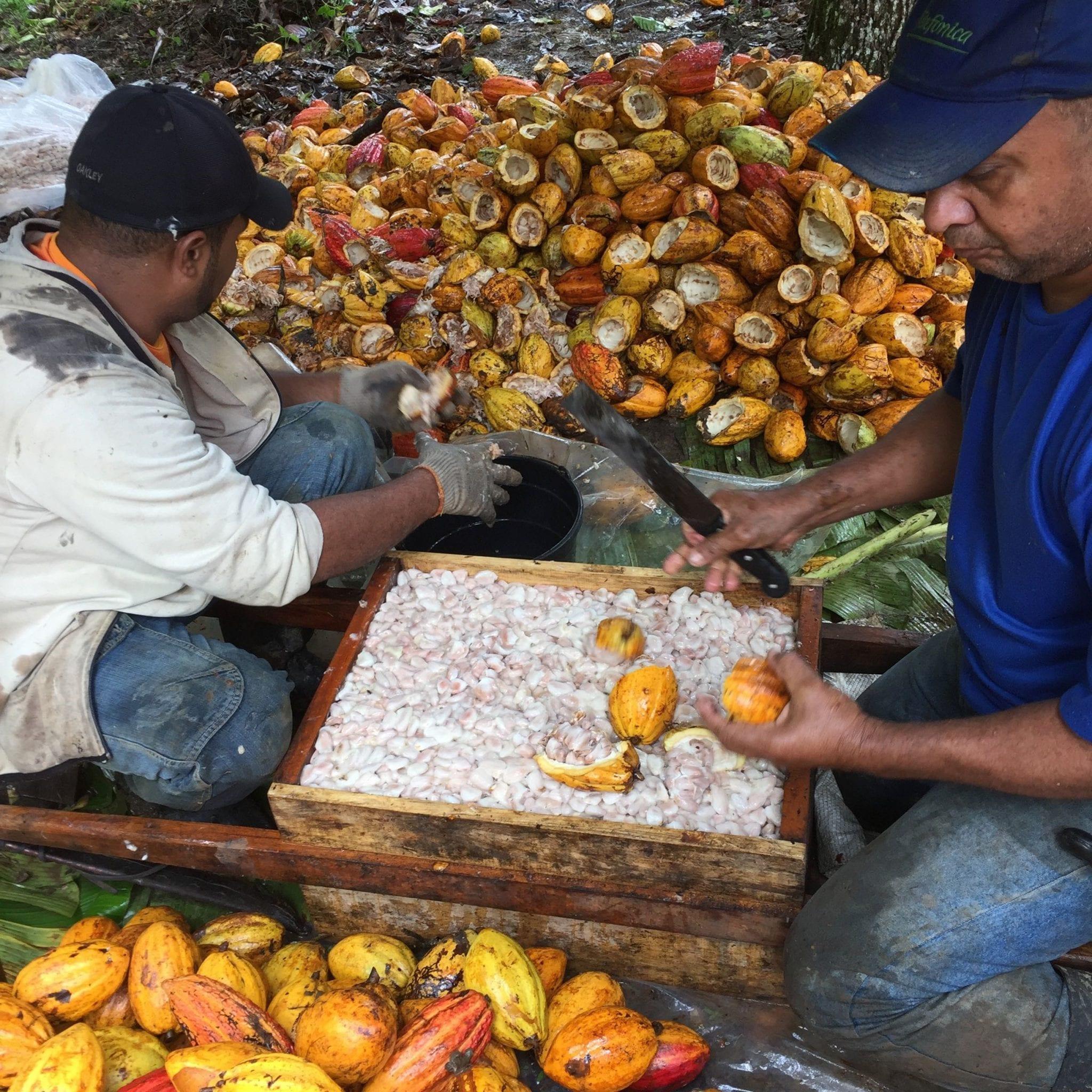 Farming Uk Meat Processing News: Explicación Paso A Paso: La Cosecha Y El Procesamiento Del