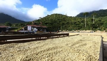 Coffee Producers, Should You Get a Business Loan?
