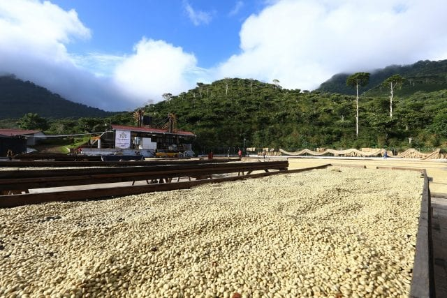 Coffee drying