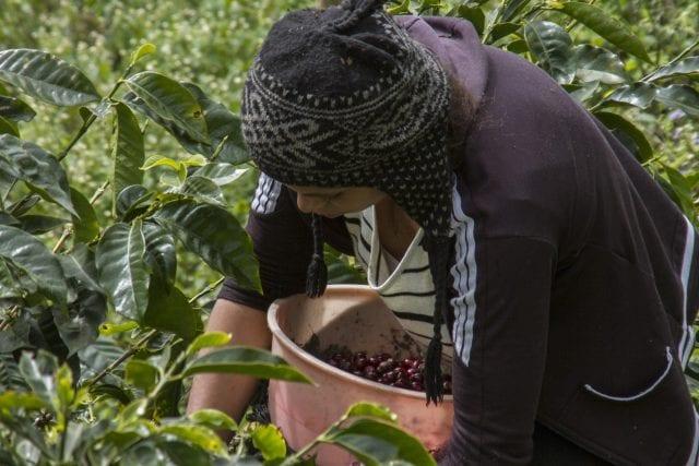 قهوههای کشورهای مختلف چه تفاوتی با هم دارند؟