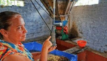 Un Precio Mínimo Para El Café Verde: ¿Sentido común o catástrofe?