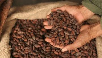 Una Guía Para Principiantes: Cómo Tostar Cacao de Calidad