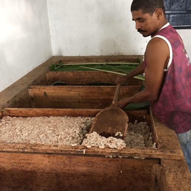 fermentacion de cacao