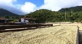 Productores de Café: ¿Deberían Pedir Un Préstamo?