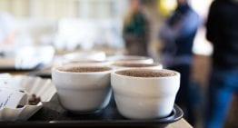 Lecciones De Nora Šmahelová: ¿Cómo Hacer Una Carrera En Café?