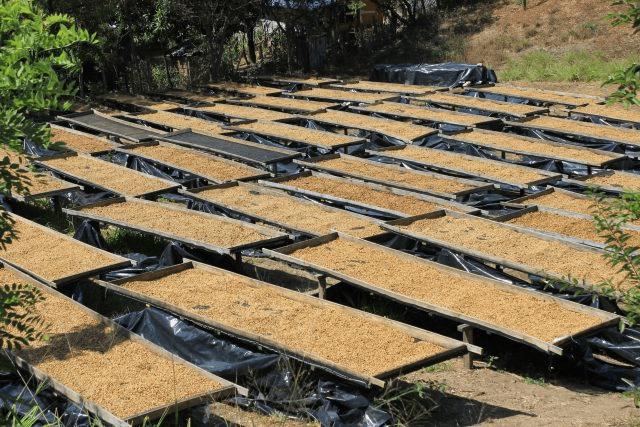 camas de secado
