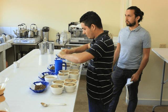 catadores de cafe