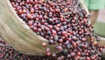 Green Coffee Pricing Transparency Is Critical (And Complicated)