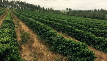 What Is a Coffee Cooperative & How Does It Support Producers?