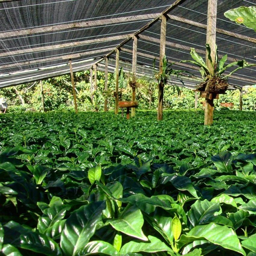 شفافیت قیمتگذاری قهوهی سبز