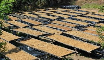 Micro Lot Coffee: How to Limit Risk & Improve Quality