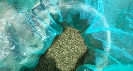 How to Ensure Green Coffee Quality in Transit & Storage