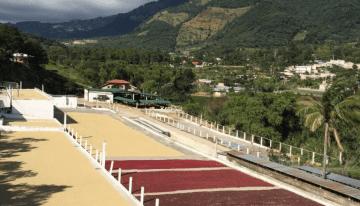 Cafés Naturales y Honey en la Taza de Excelencia de Guatemala
