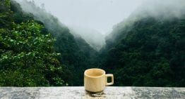 Why Taiwan's High Mountain Oolong Tea Is Brewing Up a Storm