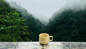 Por Qué el Té Oolong de Alta Montaña Está Causando Tanto Furor