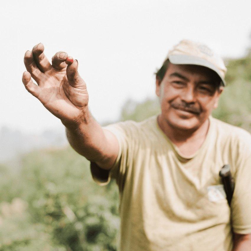 productor de cafe