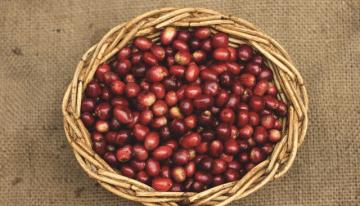 Guía para Tostadores y Compradores de Café de Ruanda
