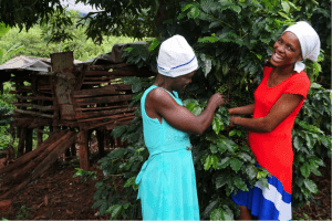 Women of the Tangwena household play an important role in their coffee farm