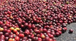 This Is How Much It Costs to Produce Coffee Across Latin America