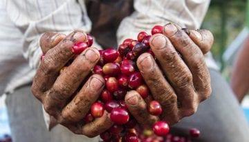 Coffee Barometer: Es Tiempo de Hablar Menos y Tomar Acción