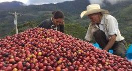 Productores: ¿Cómo Pueden Pasar del Café Comercial al de Especialidad?
