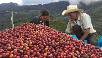 How Can Producers Transition From Commodity to Specialty Coffee?