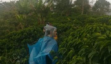 Guía para Compradores de Café: Huila, Colombia