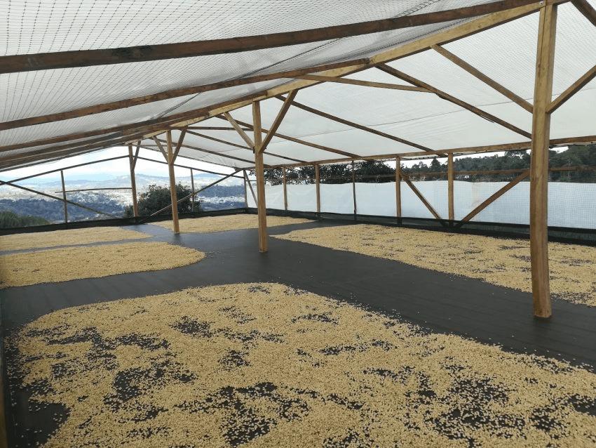 patio de secado de cafe