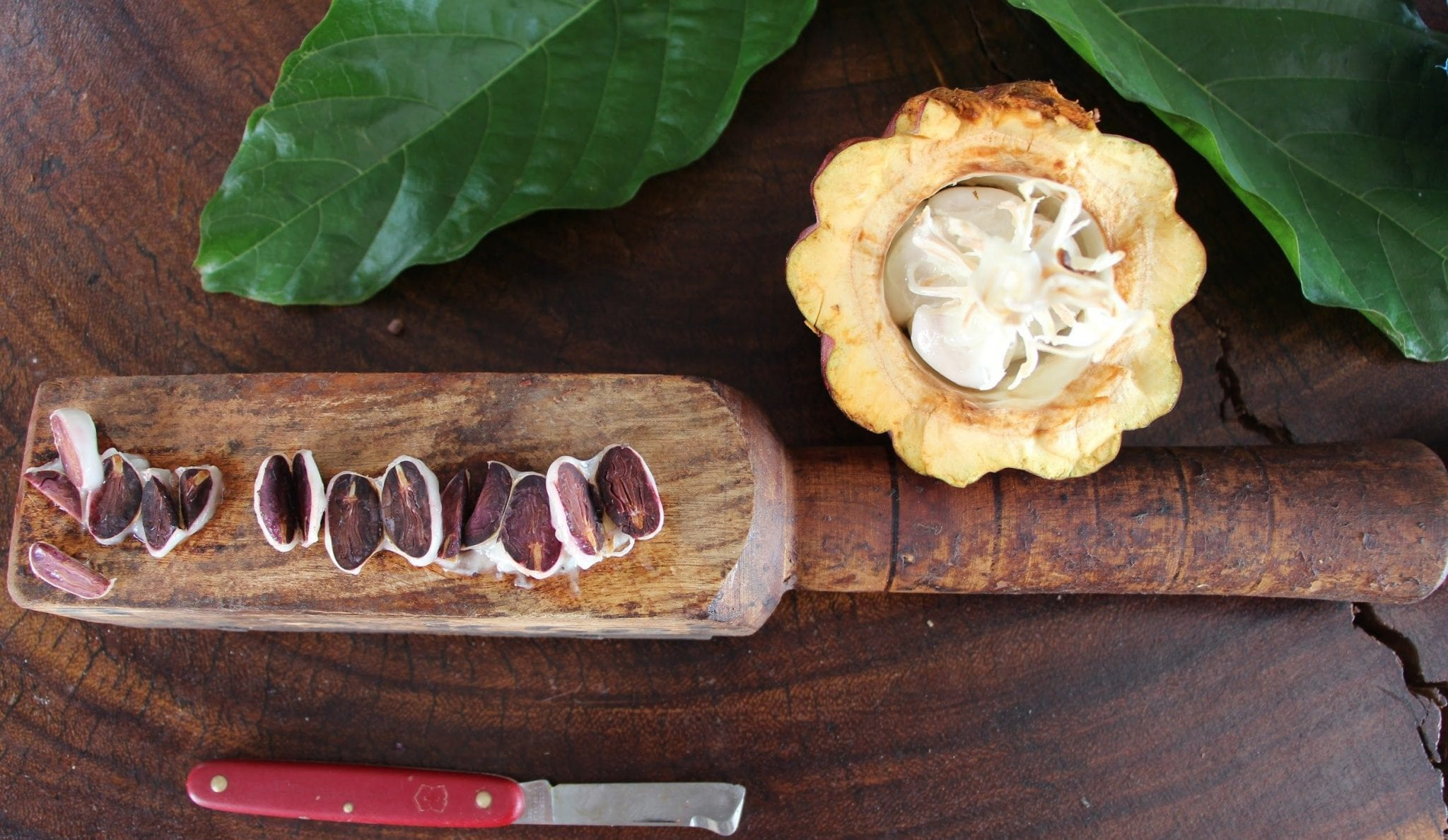 Is Criollo Really King? The Myth of Cacao's Three Varieties
