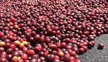 Esto es lo Que Cuesta Producir Café en Latinoamérica