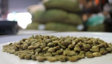 Guía Para los Cafés de Método Trillado Húmedo de Indonesia