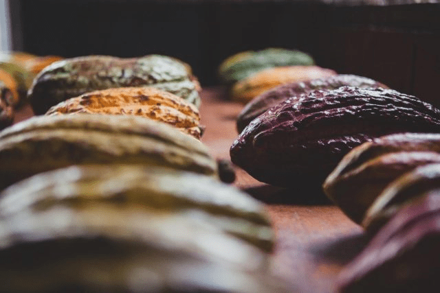 mazarco de cacao