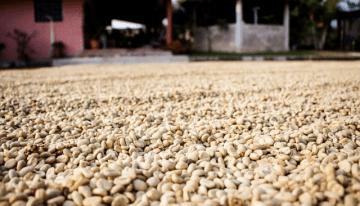 ¿Por Qué a Algunos Productores Les Es Difícil Cultivar Café Especial?