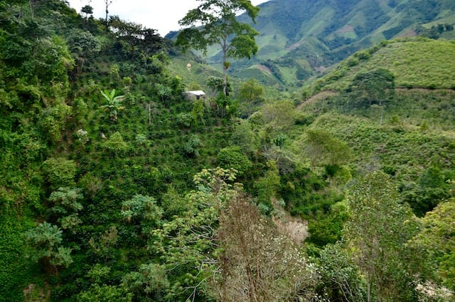 Colombian coffee farm.