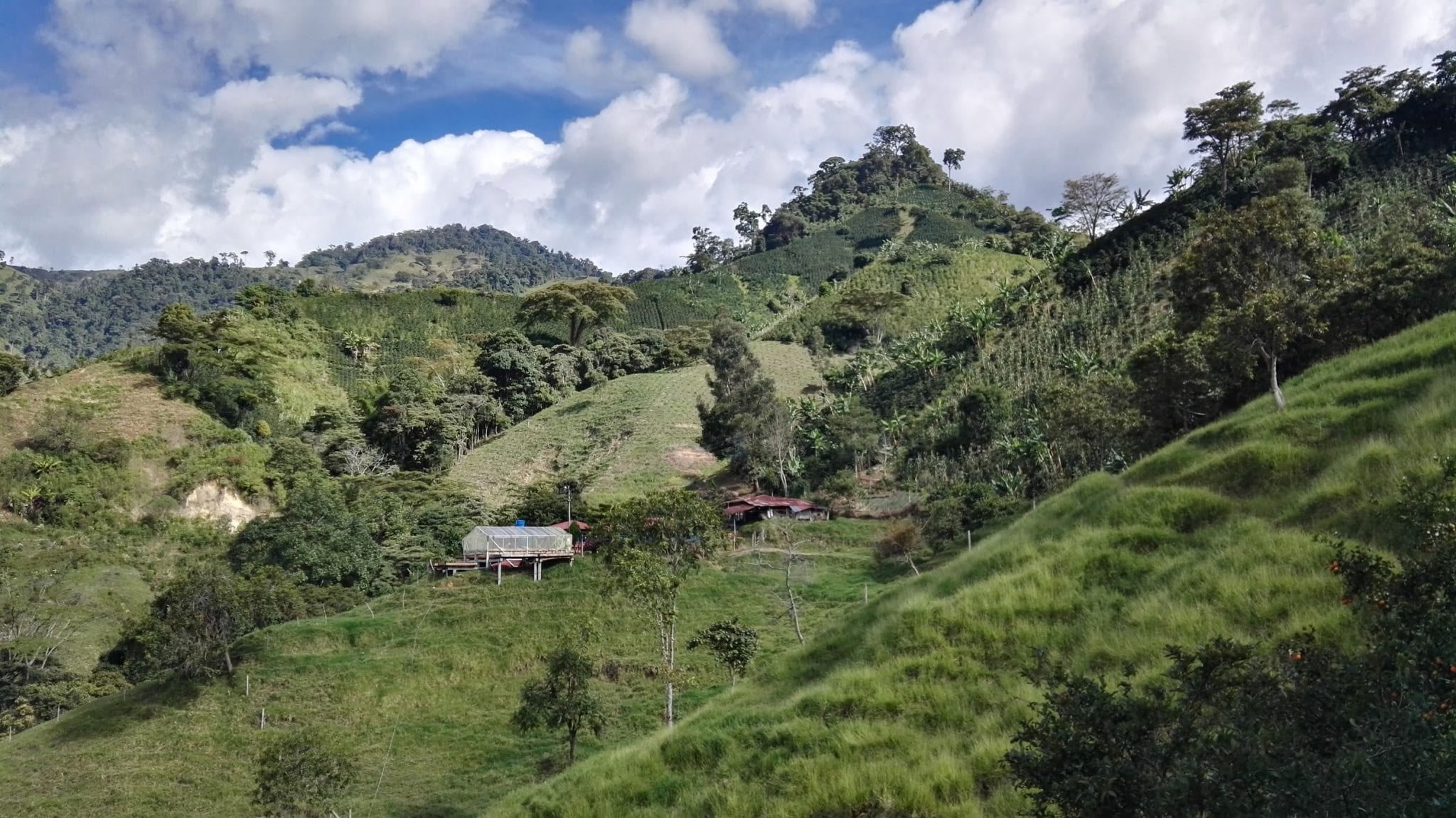 view from Finca Villa coffee farm