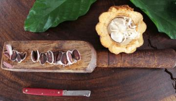 El Mito de Las 3 Variedades de Cacao