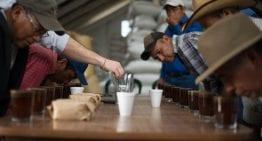 Productores: Tostar Su Café Mejora La Calidad Del Café Verde